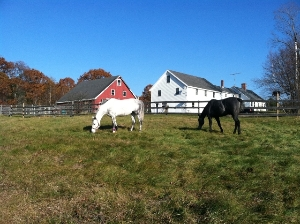 Queen of Hearts Thoroughbred Retirement Farm