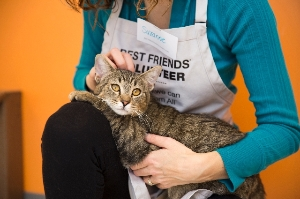 Volunteer at Best Friends with Adoptable Cats