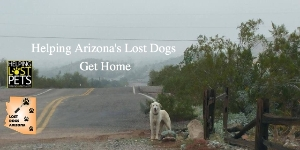 Helping Lost Dogs Get Home