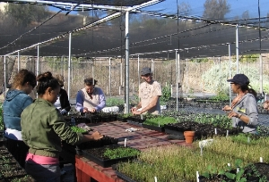 Transplanting seedlings at the nursery