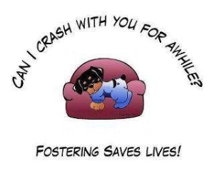 Foster Homes Needed!!