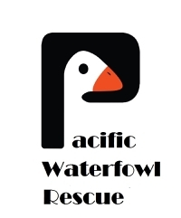 Pacific Waterfowl Rescue
