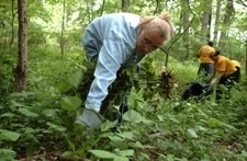 Removing Plants in the Forest