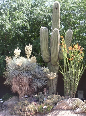 Glendale Xeriscape Demonstration Garden