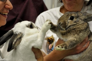 Hooray for Helping Bunnies!