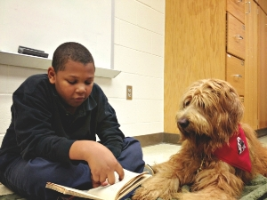 Reading Education Assistance Dog at work