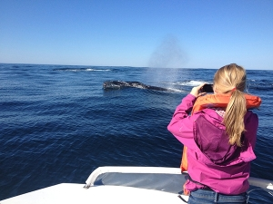 Whale & Dolphin Monitoring in South Africa