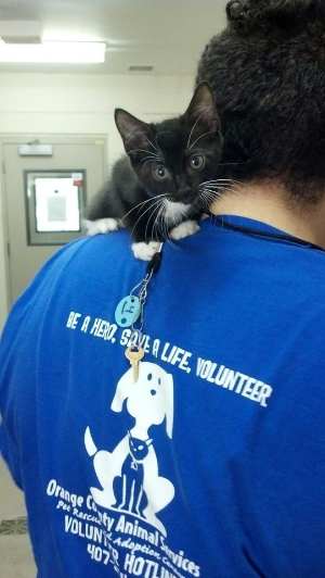Be a Hero. Save a life. Volunteer!