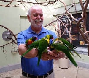 Volunteer with lorikeets