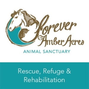 A Forever Home at Forever Amber Acres