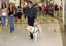 Guide Dog in Mall