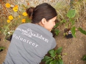 Audubon Habitat Team Volunteer