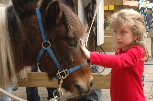 Equine therapeutic interaction