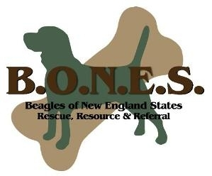 Beagles of New England States