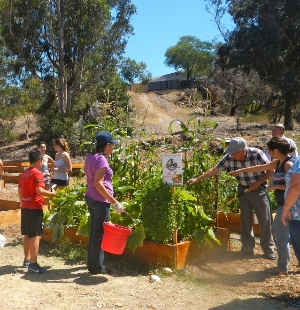 Working in the community garden