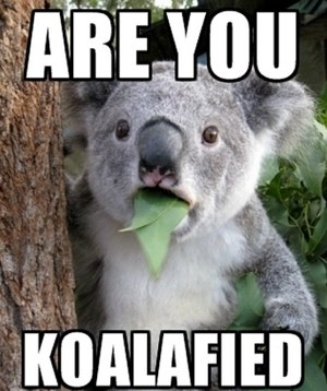 Are you Koalafied?