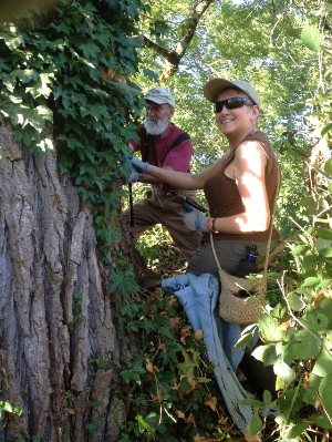 Pulling Ivy at Turtle Flats