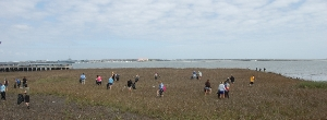 Waterfront Marsh Cleanup