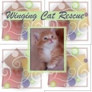Winging Cat Rescue